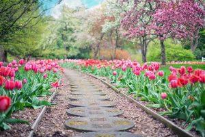 Gardez votre jardin en bonne santé facilement