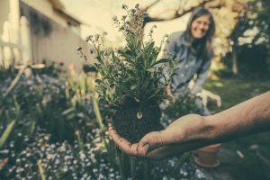 Le jardinage est une activité qui demande du temps et beaucoup d'observation. Même si vous êtes passionnés des arbustes, des plantes ou des petits potagers, il vous faut quelques notions avant de commencer. Voici 3 astuces qui pourront vous accompagner dans vos premiers pas de jardinier.  Se procurer de bons outils Pour bien jardiner, vous devez disposer d'un bon équipement. Dans votre jardin, vous aurez besoin d'une griffe, d'une bêche, d'un tuyau d'arrosage et/ou d'un arrosoir. Il vous faut aussi un petit sécateur, du terreau, des gants ainsi que des engrais adaptés. Par ailleurs, si vous souhaitez vous lancer dans un jardinage de balcon et de terrasse, certains éléments sont indispensables. Il s'agit des pots, des gravillons ou des billes d'argile que vous mettrez au fond du pot.  Ils permettent de filtrer les eaux en surplus afin d'éviter une éventuelle inondation sur la terrasse. Vous aurez aussi besoin de tous les autres outils cités plus haut suivis d'un plantoir et d'un petit râteau. De précieux conseils sur le jardinage provenant des initiés vous feront également un grand bien.  Choisir un emplacement approprié Lors que le massif est plus éloigné de votre habitation, vous vous en occuperez moins. C'est pourquoi les experts en jardinage conseillent de choisir un espace qui est à proximité de votre résidence. De même, si l'espace est petit vous n'aurez pas à faire plusieurs plantations. En outre, vous devez opter pour un endroit où le terrain sera facile à travailler. Pour cela, éviter de vous installer sous un arbre ou contre une haie. Les racines de ces végétaux constitueront un obstacle pour vous lors du creusage.  Notez qu'il est conseillé de trouver un emplacement qui n'est ni au plein soleil ni à l'ombre. En effet, le sol est trop sec en plein soleil. Par contre, avec un espace à l'ombre, la terre est trop humide et les maladies peuvent vite se développer. Pour cela, il vous faut choisir une orientation sud-ouest. En outre, dans votre jardin, il est con